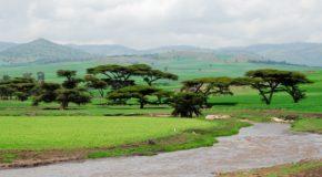 curiosities of ethiopia