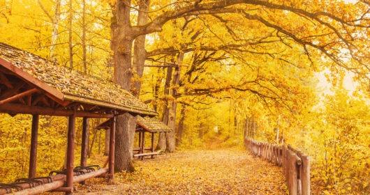 4 Reisen im Herbst, um das beste Halloween zu erleben