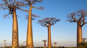 Was gibt es in Madagaskar zu sehen