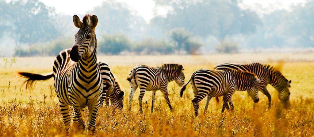 Der beste Zeitpunkt für eine Safari nach Südafrika