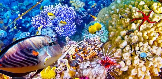 pez en la barrera de coral de australia