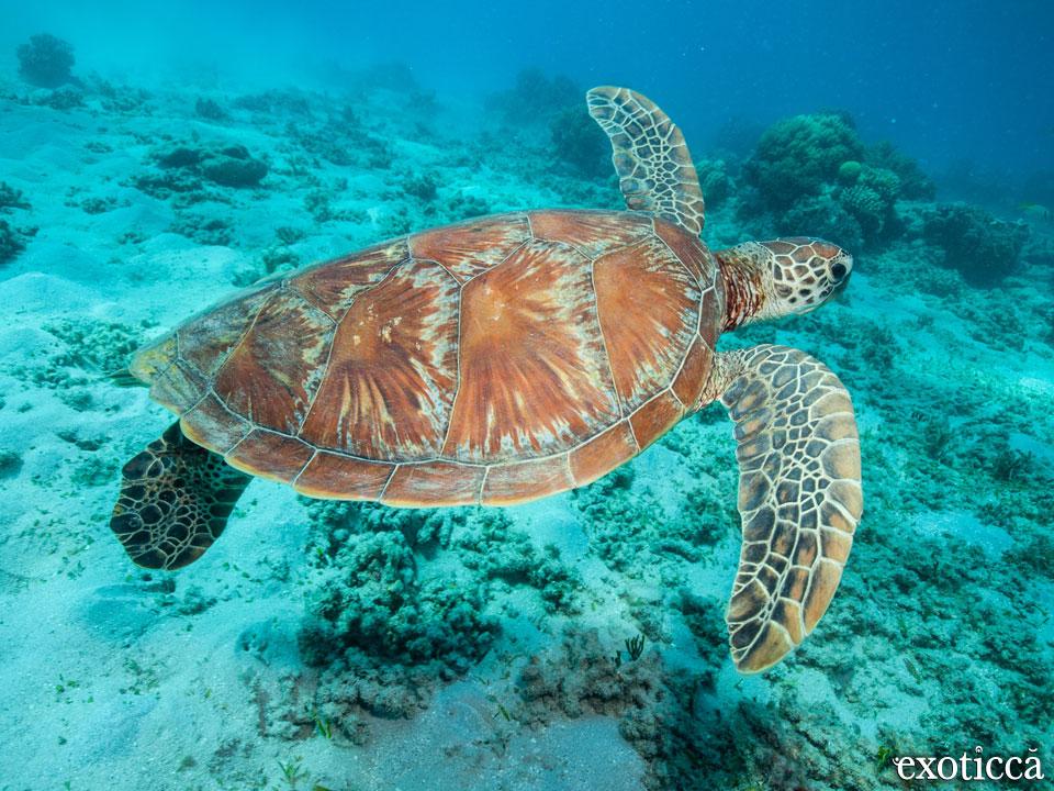 Cairns, la puerta de entrada a la gran barrera de coral australiana
