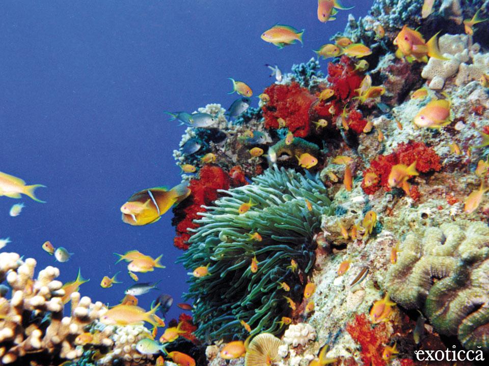 Playas de Aqaba, acceso al Mar Rojo en Jordania