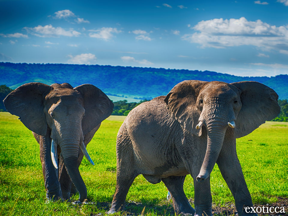 Parque Kruger, paraíso de la vida salvaje sudafricana