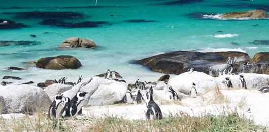 pingüinos de Sudáfrica