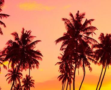 puesta de sol entre palmeras