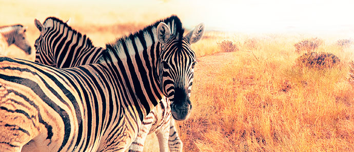 03-serengeti-tanzania