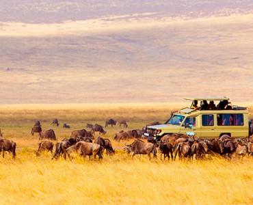 safaris en Africa - coche rodeado de búfalos