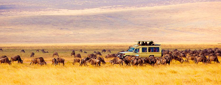 Resultado de imagen de safari por africa