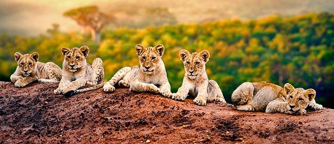 Sudáfrica con niños