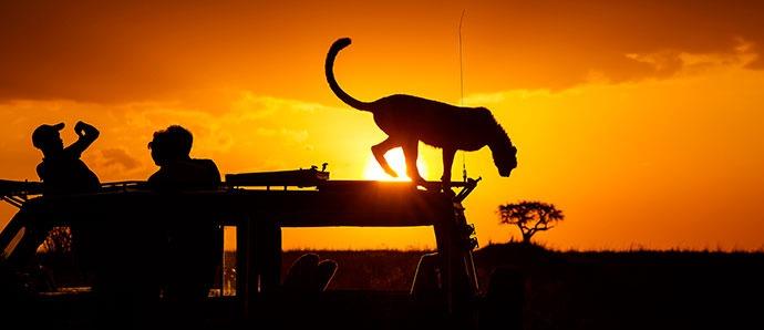 Safari por Kenia