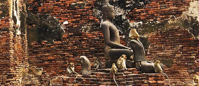 Lopburi monos