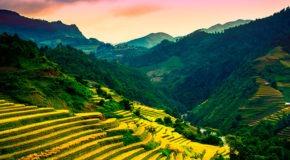 campos amarillos en Sapa