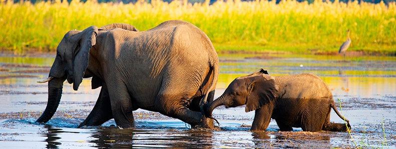 post-blog-esxoticca-sudafrica-zimbabwe-002-zambeze-rio