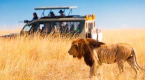 Consejos a tener en cuenta si vas a realizar un safari africano