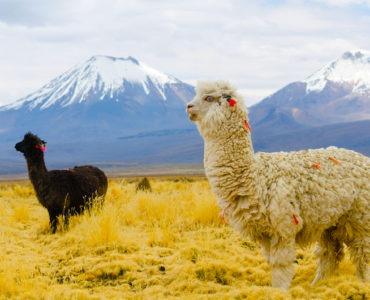 lo mejor de Bolivia