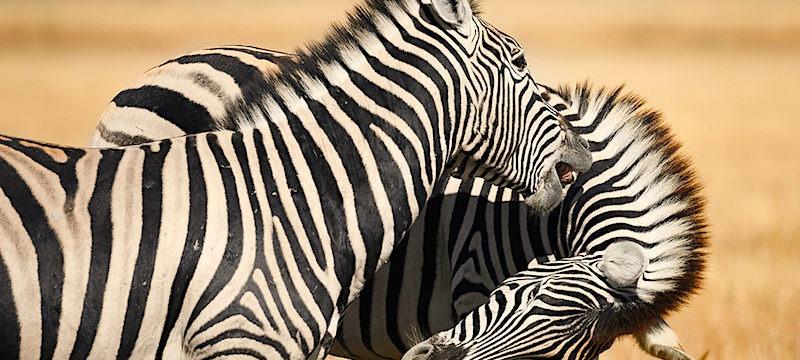 Top 5 lugares que ver en Namibia