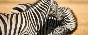 Top 5 lugares que ver en Namibia | Disfruta de un entorno salvaje