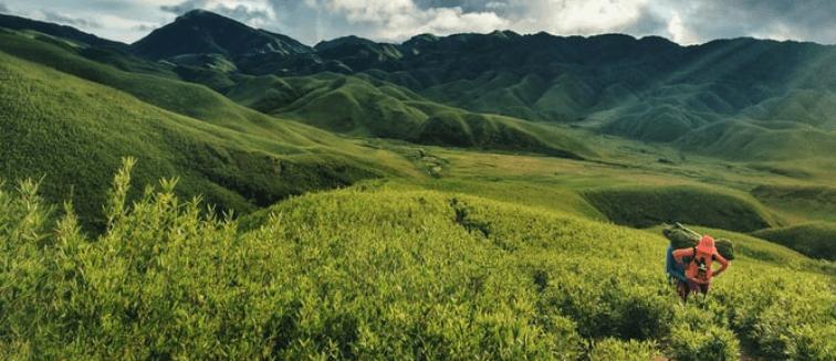 plantaciones de té India