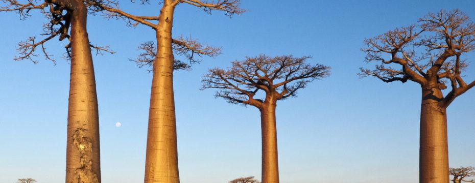 Qué-ver-en-Madagascar