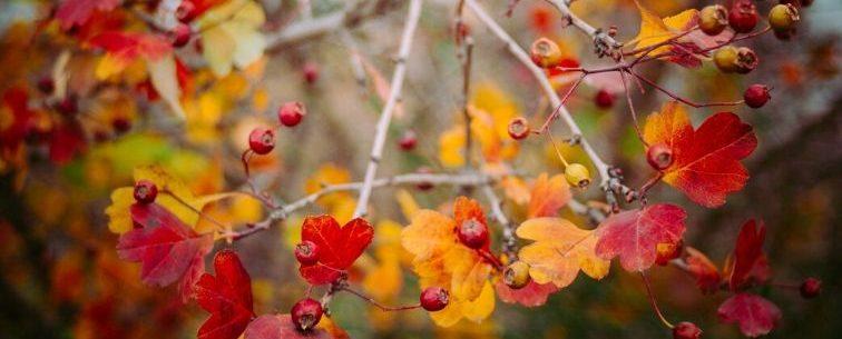 destinos para viajar en otoño