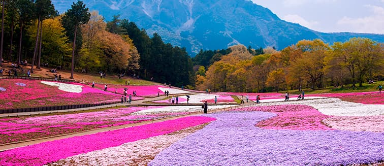 Japón en otoño