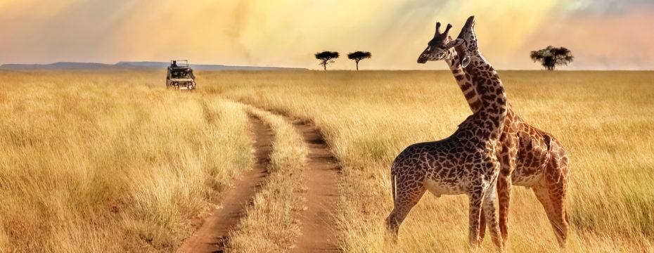 safaris-en-afrique