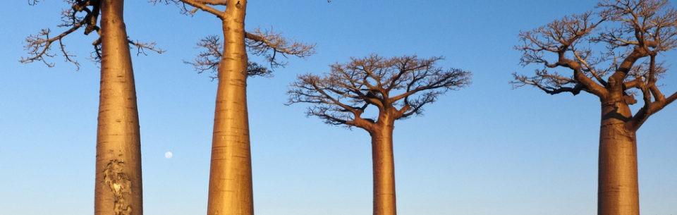 Que voir a Madagascar