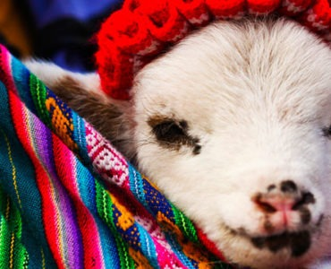 tips for holidays in Peru with children