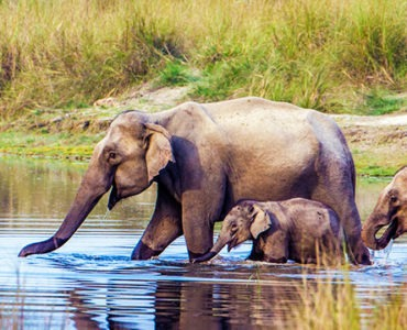 elephants having a bath