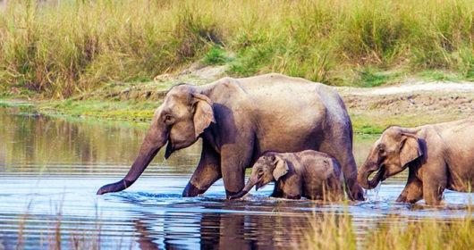 elephants having a bath