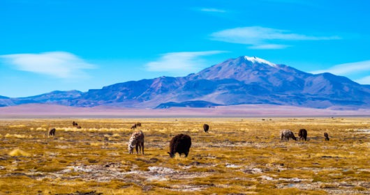largest deserts in South America