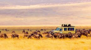 best safaris in Africa
