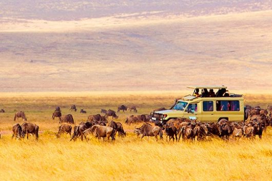 best safaris in Africa