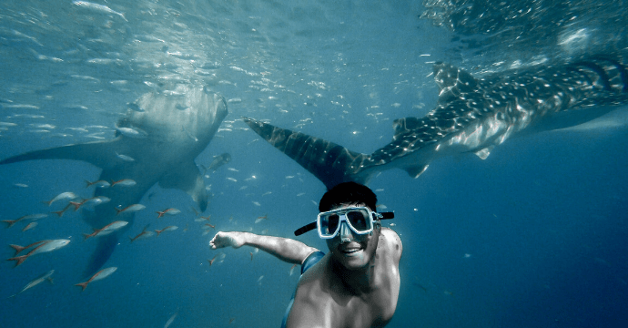 swimming with whale sharks - the best things to do in the Philippines