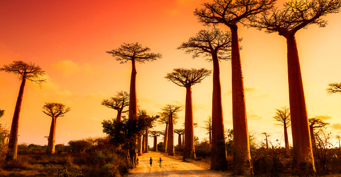 avenue of baobabs, most beautiful places in Africa