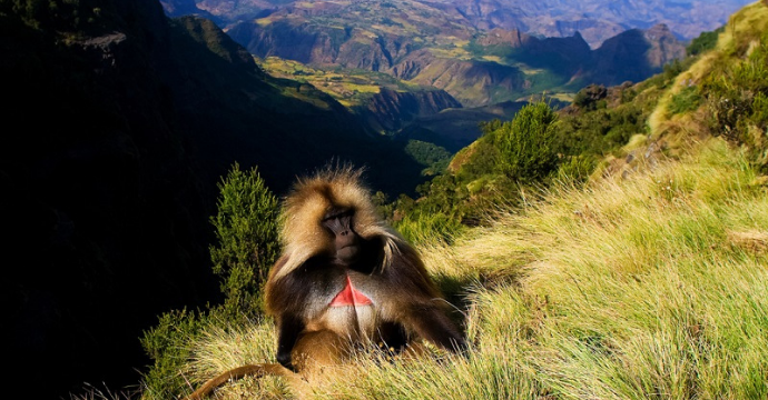 Simien Mountains: most beautiful places in Africa