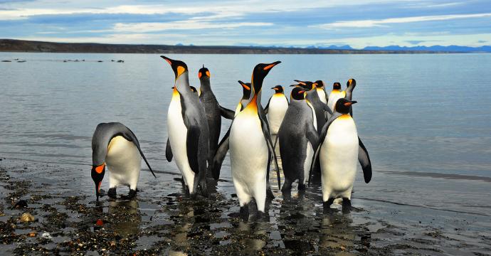 Patagonia wildlife: Penguins