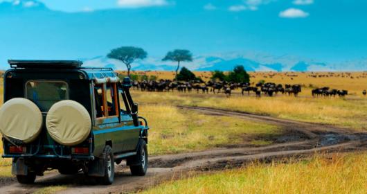 African safaris & wildlife tours