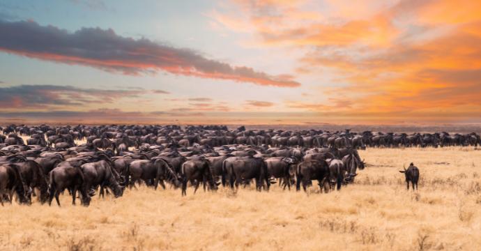 African safaris in Tanzania
