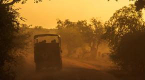Animals in Sri Lanka: best wildlife safaris