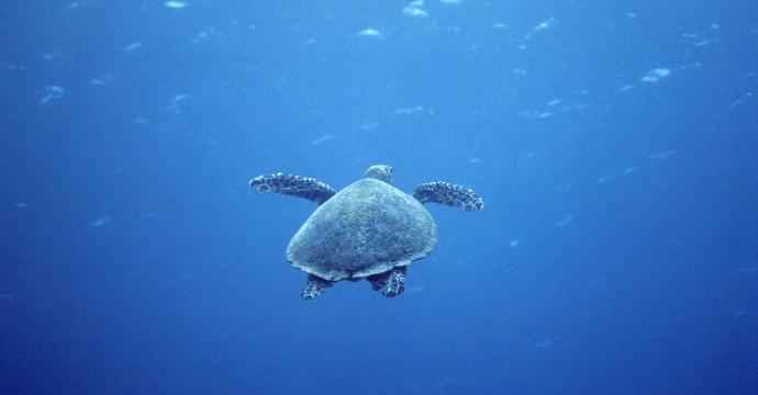 Hikkaduwa Marine National Park
