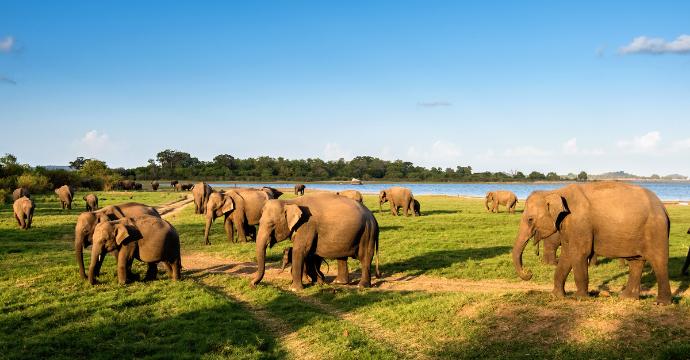 Minneriya National Park: Animals in Sri Lanka