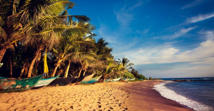Mirissa Beach - wildlife in Sri Lanka