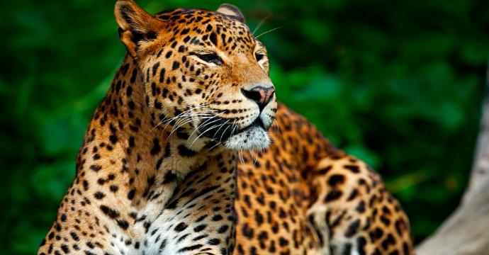 Yala National Park: wildlife in Sri Lanka