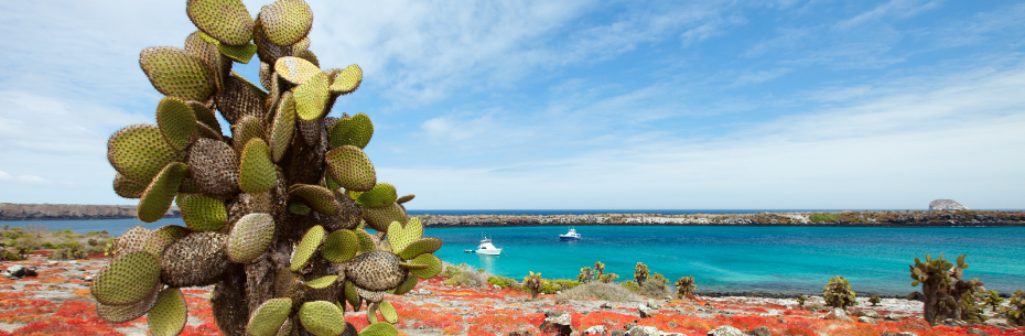 Galapagos Islands Animals and Rare Wildlife