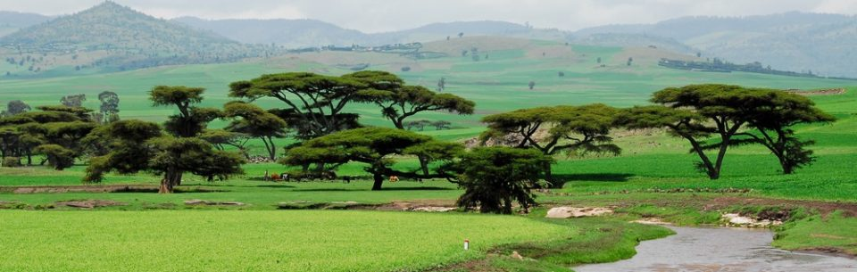 curiosities of ethiopia