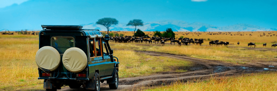Best African safaris and wildlife tourss